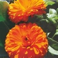 Bulk Packing - Flower Seeds, Flowers seeds online in India | Buy flower seeds online, Flower seeds online, Garden seeds, Flower seeds, Herb seeds | Scoop.it