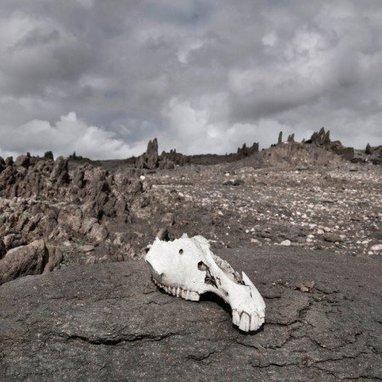 Cow skull photographie de la semaine sur La Galerie Virtuelle   Photographie d'art   Scoop.it