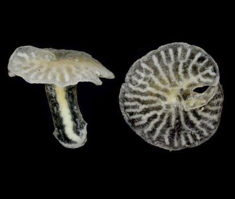 tovima.gr - Μυστηριώδη θαλάσσια πλάσματα δεν χωρούν στο δέντρο της ζωής | Η Βιολογία στην Εκπαίδευση | Scoop.it