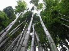 Sky is the limit – The chinese bamboo story (Lesson of patience) | Business Coaching | Scoop.it