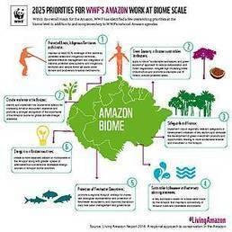 Living Amazon Report 2016 | Rainforest EXPLORER:  News & Notes | Scoop.it