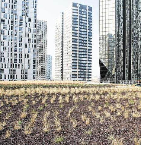 Verdir les toits etlesfaçades de Paris | Agriculture Urbaine et gouvernance alimentaire | Scoop.it