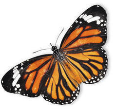 Why The Butterflies Are Gone | GarryRogers Biosphere News | Scoop.it