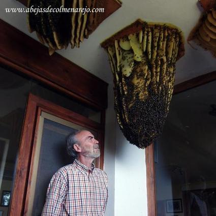 Une ruche la maison abeilles intoxi for Abeilles dans la maison