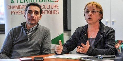 Grippe aviaire dans les Pyrénées-Atlantiques : « Il y a une prise de conscience » | Agriculture en Pyrénées-Atlantiques | Scoop.it
