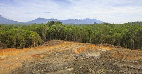 La Norvège devient le premier pays à interdire l'importation de produits issus de la forêt tropicale | Biodiversité & Relations Homme - Nature - Environnement : Un Scoop.it du Muséum de Toulouse | Scoop.it