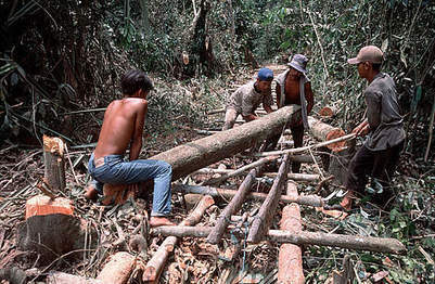Illegal logging   Ecological sustainable development of environment - Logging   Scoop.it