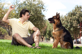 Role of Dogs in Treating Soldiers with PTSD | Pets World | Combat PTSD | Scoop.it
