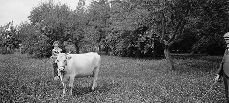 (Empathic Design) What cows can teach us about empathy   Empathy and Compassion   Scoop.it