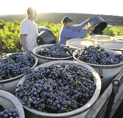 Le vignoble du Languedoc-Roussillon monte en gamme | Le vin quotidien | Scoop.it