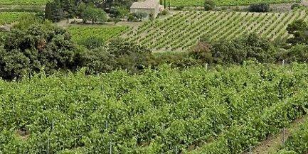 Aude : le viticulteur utilisait des produits phytosanitaires interdits | Le vin quotidien | Scoop.it