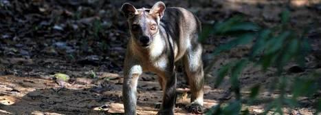 INDRI Ultimate Wildlife Tours » Tours » Destinations » Madagascar | Wildlife cruises | Scoop.it