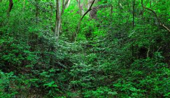 BE Japon Quel avenir pour la biodiversité ?   Responsabilité humaine et environnement   Scoop.it