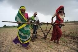 Interdiction des semences OGM dans l'état du Maharashtra en Inde   Abeilles, intoxications et informations   Scoop.it