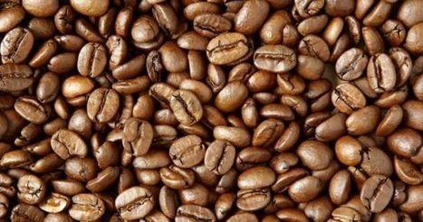 Aldi Defining Sustainability Standards For Coffee-Purchasing | ESM Magazine | Market information | Scoop.it