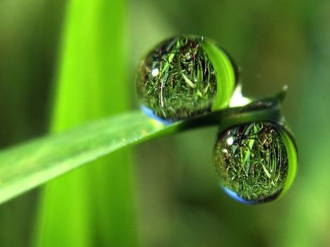 19 mind-blowing photos of wet grass by evan leeson | For the love of Photography | Scoop.it