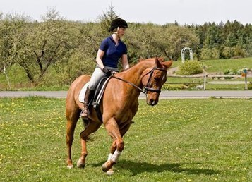 How To: Condition Your Horse for Summer Riding | Video ... | Horses | Scoop.it
