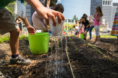 An Urban Farm Thrives Again in Lower Manhattan | School Gardening Resources | Scoop.it