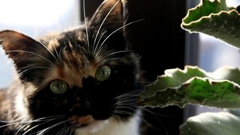 Five Easy Tips for Keeping Pets Away From Your Houseplants | Bazaar | Scoop.it