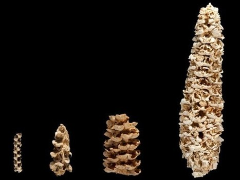 How corn became corn | Archaeology News | Scoop.it