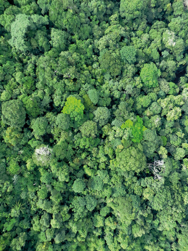 Pathogens and insect herbivores drive rainforest plant diversity and composition (nature 2014)   ecology   Scoop.it