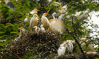 The week in wildlife - in pictures   100 Acre Wood   Scoop.it