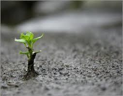 La résilience : une nouvelle aptitude à développer chez les individus comme dans les organisations | Work and Joy© | Scoop.it