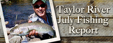 Taylor River Fly Fishing Report for July 2013 - Wilder on the Taylor | Fly Fishing | Scoop.it