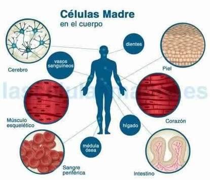 Importancia de las células madre para tratar numerosas enfermedades | las celulas | Scoop.it