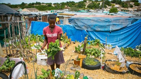 Outside Cape Town: Growing Food for Life - Organic Connections | Organic Farming | Scoop.it