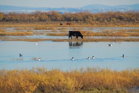 Journée mondiale des zones humides 2014 – Les zones humides et l'agriculture | ZONES_HUMIDES ET AGRICULTURE | Scoop.it