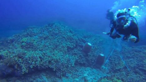 Diver's underwater attack on activist | All about water, the oceans, environmental issues | Scoop.it