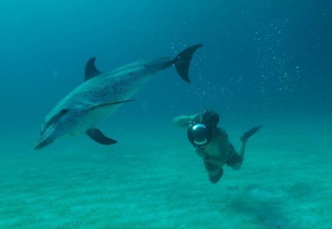 How Captivity Has Changed the Way Dolphins Communicate | Marine Conservation and Ecology | Scoop.it