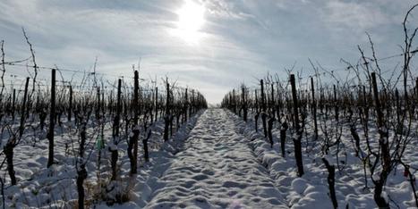 Le marc de raisin sauvera t-il la planète ? | Vins et Vignerons | Scoop.it