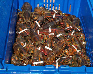 FIS - Worldnews - Nova Scotia advocates fair acces to export markets for lobster | Nova Scotia Fishing | Scoop.it