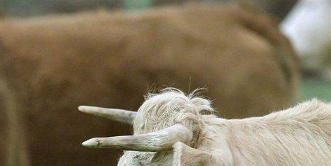 Agriculture et artisanat touchés | Agriculture en Dordogne | Scoop.it