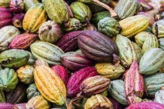 Cacao: Afnor appelle les acteurs français à rejoindre la commission de normalisation   Innovation & Co   Scoop.it
