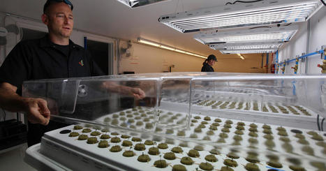 Where the jobs are: America's pot industry | CLOVER ENTERPRISES ''THE ENTERTAINMENT OF CHOICE'' | Scoop.it