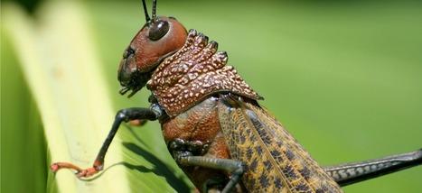 C'est confirmé, les insectes sont vraiment plus nourrissants que le bœuf ou le poulet | Slate.fr | Agriculture citadine | Scoop.it