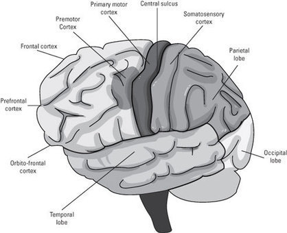 Neuroscience For Dummies Cheat Sheet - For Dummies | Neuro | Scoop.it