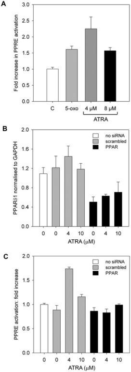 PLOS ONE: Cell Survival Signalling through PPARδ and Arachidonic Acid Metabolites in Neuroblastoma   Angiogenesis   Scoop.it