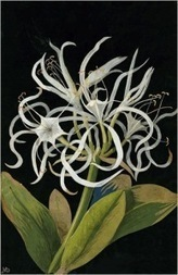 "Flora Delanica: Art and Botany in Mrs. Delany's ""paper mosaicks"" 