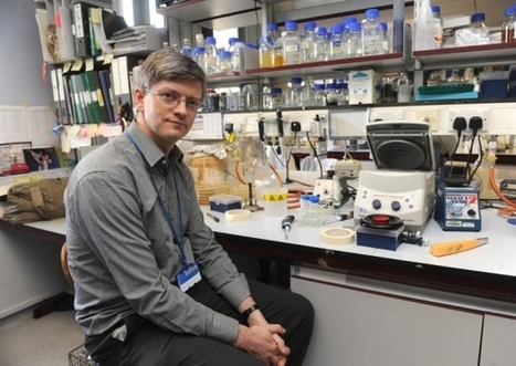 Sheffield scientists get immune system funding boost - Sheffield Telegraph | MRC research in the news | Scoop.it