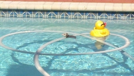 How to Prevent an Animal From Drowning in Your Pool   Animal Empathy & Natural Pet Care   Scoop.it