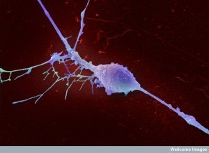 Maintaining Neuronal Identity | Social Neuroscience Advances | Scoop.it