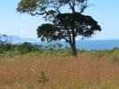 Respecting the elders of our land can help rehabilitate the ... | Land and Water Management | Scoop.it