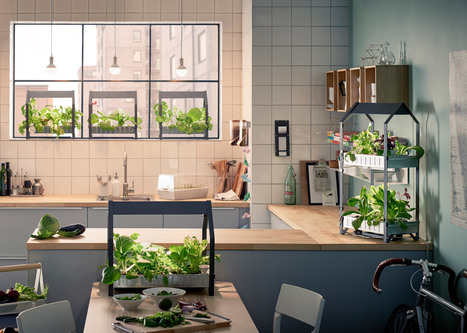 Ikea moves into indoor gardening with hydroponic kit   A. Perry Design Lounge   Scoop.it
