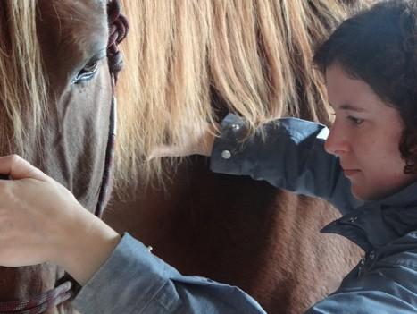 Why massage can help the ridden horse.   Horsemanship   Scoop.it