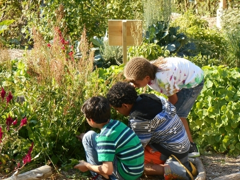 Cultivate Health initiative helps the school garden movement grow | School Gardening Resources | Scoop.it