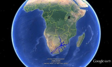 The '800 Challenge' - Southern Africa: 2013: - 800 Challenge [2nd Quarter review - Stats, sundries & other.] | 800 Challenge - Birding Southern Africa | Scoop.it
